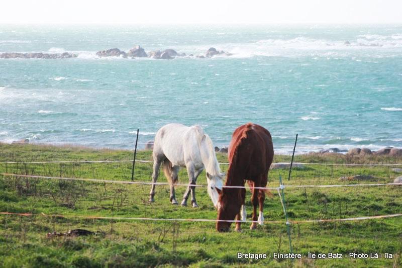 Ile de Batz, chevaux sur la côte Nord